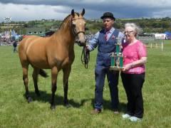 champion-pony-clonakilty